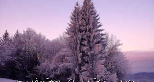 278367093609737-310x165 دعای طلب مغفرت و رسیدن به حاجات و خواسته ها