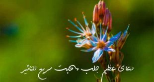 2836279362926722-310x165 دعای عظیم جلب محبت سریع التاثیر
