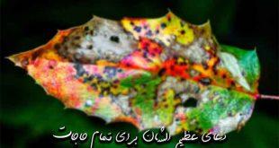 28736273962792632722-310x165 دعای عظیم الشان برای تمام حاجات
