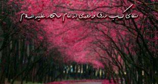 2738263729367960237-310x165 دعای کسب رزق و روزی از امام سجاد علیه السلام
