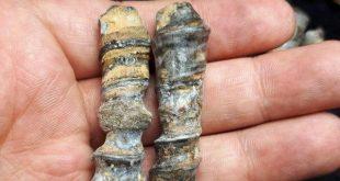 photo_2020-02-04_18-53-40-310x165 بررسی و خرید عرج حجری (سنگی) عرج بری (حیوانی)
