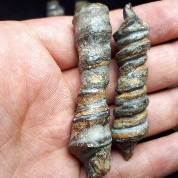 photo_2020-02-04_18-53-49 بررسی و خرید عرج حجری (سنگی) عرج بری (حیوانی)
