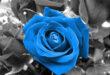 673FEA5B-DE2A-42F4-9F39-EF64C5AF2D6D-110x75 دعای مجرب برای مهر و محبت - دعای جلب نظر و دوست داشتن تضمینی