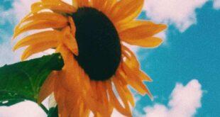 دعا-برای-جلب-محبت-خواستگار-و-ازدواج-310x165 دعا برای ازدواج دختر با سن بالا و جلب محبت پسر